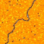 (a) AFM image (400 x 400 nm) of double stranded DNA on mica obtained with NSC14/Hi-Res-C probe (now upgraded to Hi'Res-C14/Cr-Au).