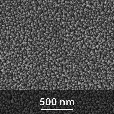 SEM image of the PA01 surface
