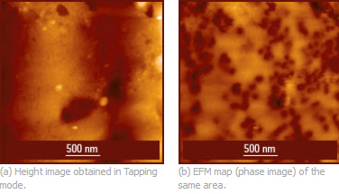 Fig. 1. Height and phase images of the rubber-modified isotactic polypropylene filled with carbon black. The images were obtained in Electric Force Microscopy mode using NSC14/Pt probes (now upgraded to HQ:NSC14/Pt): the height image was obtained in the first pass and the phase image was obtained in the second pass with a lift distance of 20 nm. Images courtesy of S. Magonov.