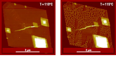 Fig. 1. Height images of dry single crystals of polyethylene measured at 110°C temperature and after 1.5 hr annealing at 115°C. Height histograms corresponding to AFM show the evolution of lamellar thickness after annealing at different temperatures. (*D.A. Ivanov, et all, Macromolecules, 35, 9813- 9818 (2002)).